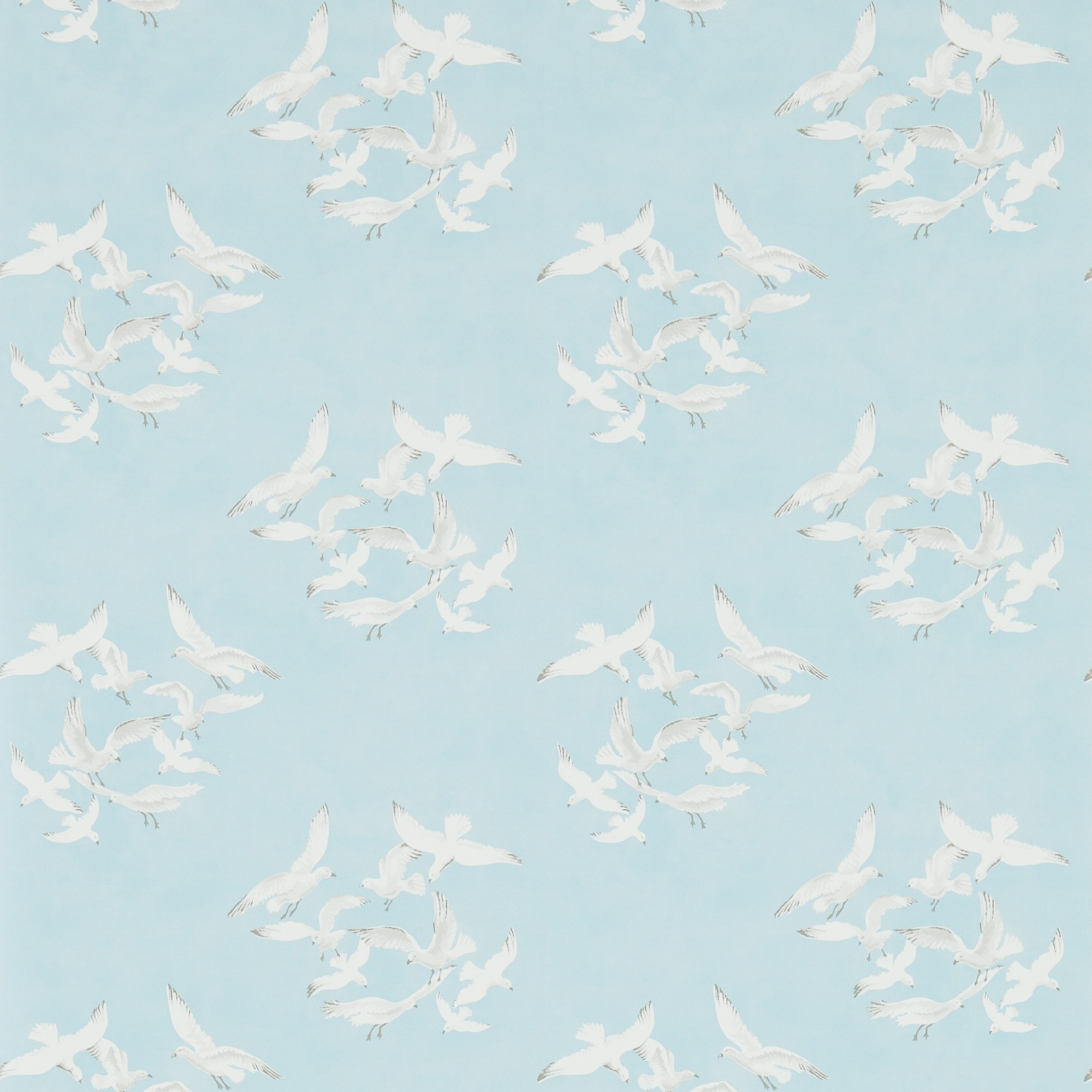 Seagulls-214585