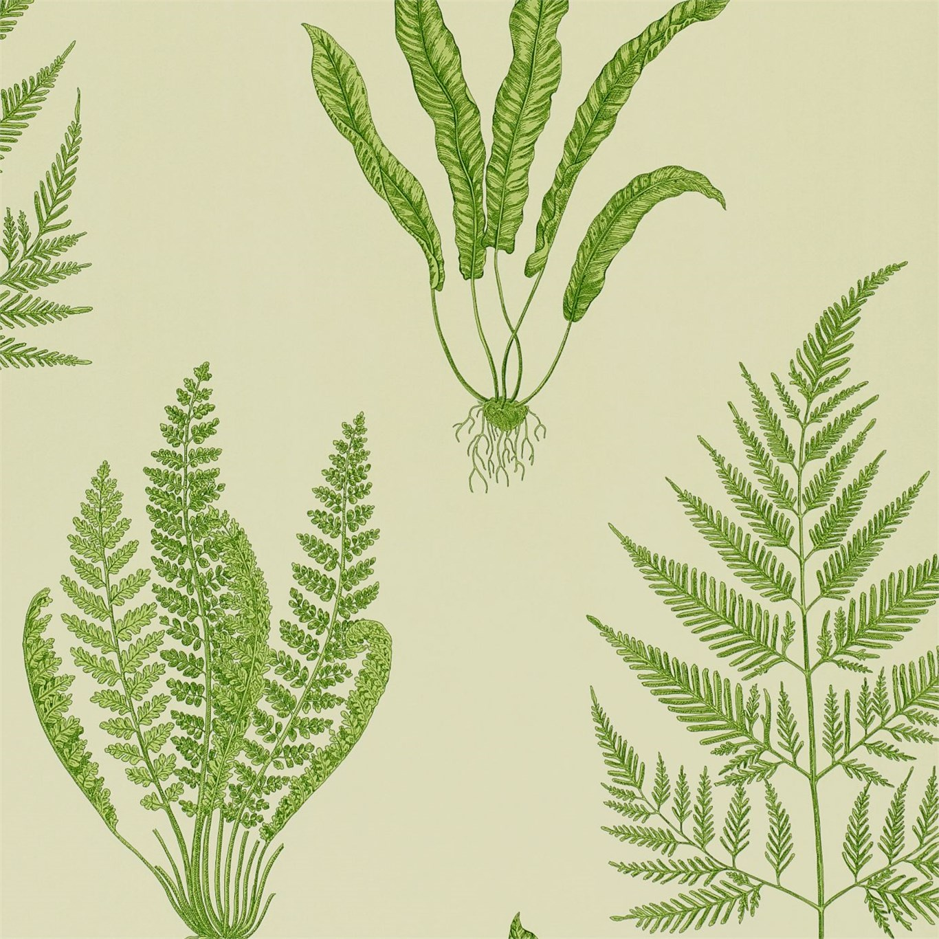 Woodland Ferns DAPGWO102