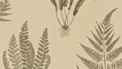 Woodland Ferns DAPGWO103