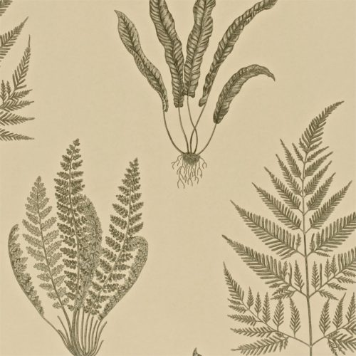 Woodland Ferns DAPGWO103