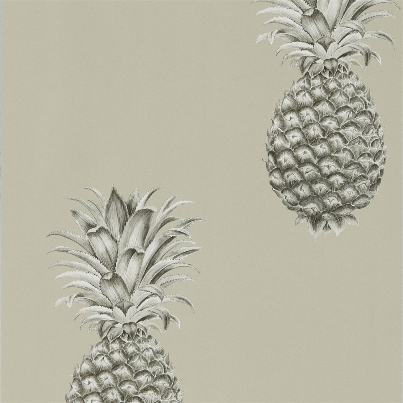 Pineapple Royale 216323